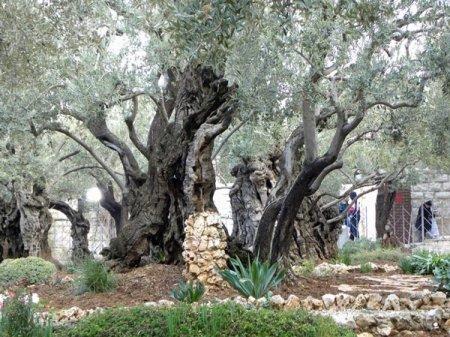 tree-branch-plant_re